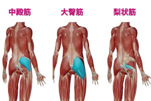 「お尻の筋肉」の画像検索結果