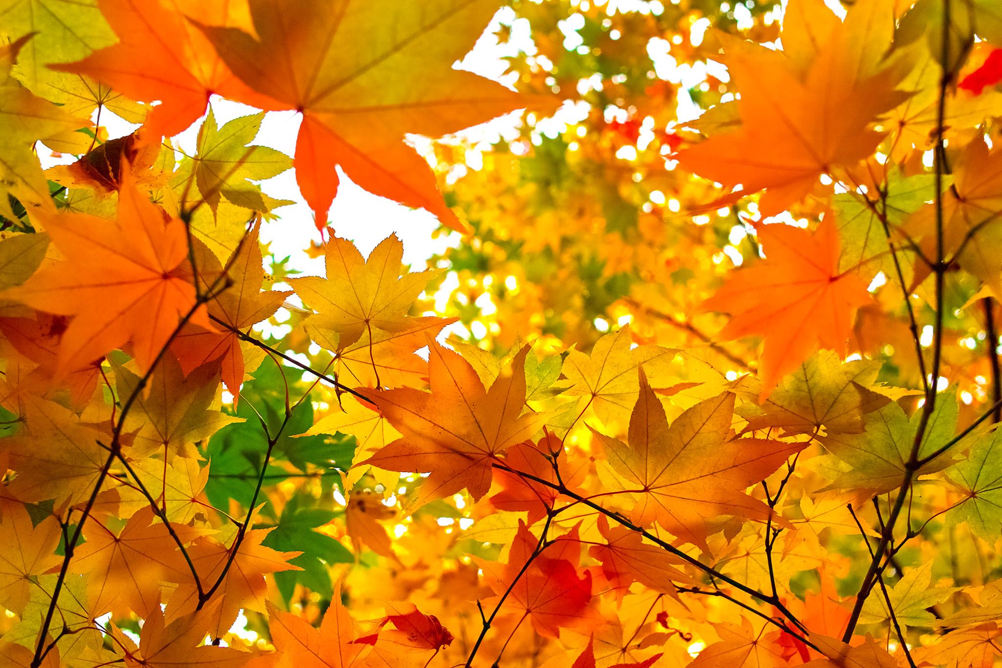 紅葉を見にいこうよう!